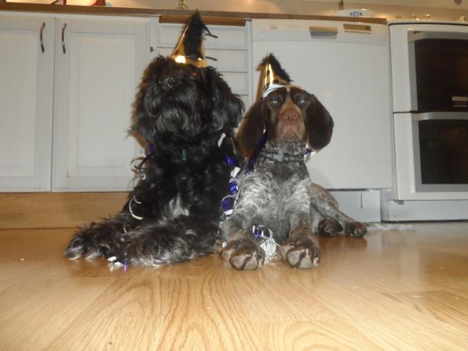 Partyanimal? Trassel och Hagel passar på att önska er alla ett gott nytt år.