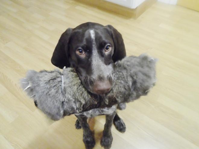 Att leverera dummien med kaninskinn går oftast bra.