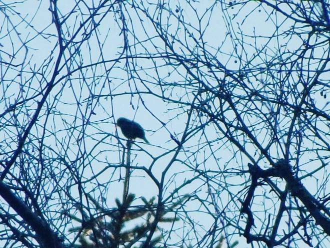 Kan ni avgöra på siluetten vad detta är för fågel?