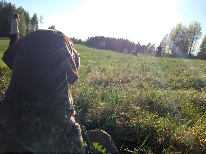 Hagel får ta en paus och träna sig på att i lugn och ro se andra arbeta.