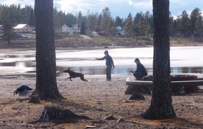 Här skickar Jaana Tengman sin hund att apportera. Vacker miljö inte sant?
