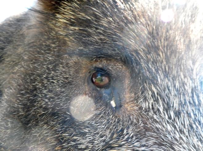Ser ni vad detta är för djur? Träffade den på Vildmarksdagarna.