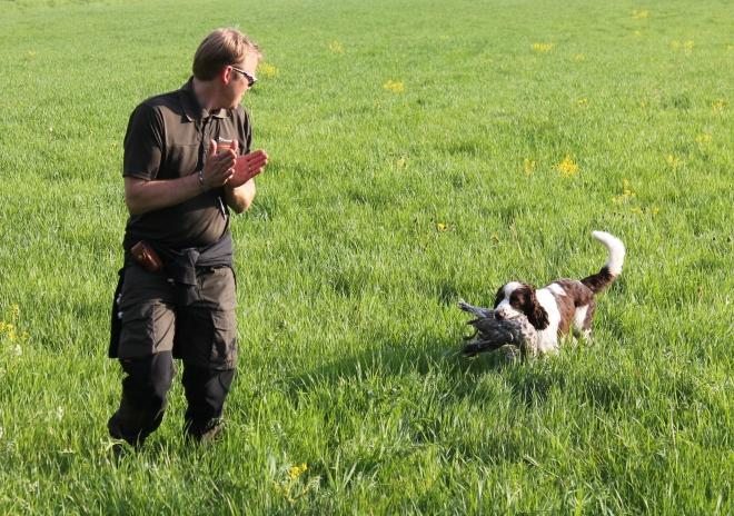 Fredrik klappar händerna och berömmer sin springer spaniel Molle i fältsöket.
