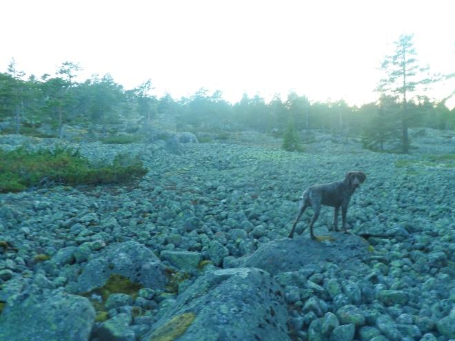 På vår utforskarrunda fann vi det här stenpartiet.