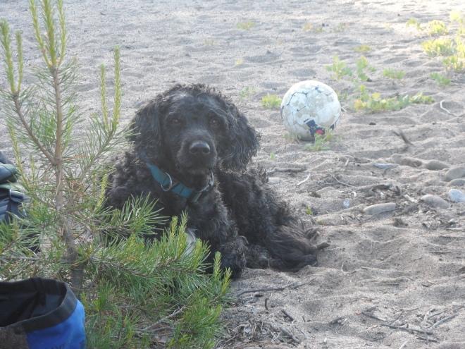 Trassel kände lugnet och njöt av livet på stranden.