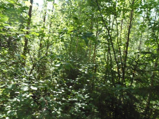Lite av den djungel vi jobbade oss igenom.