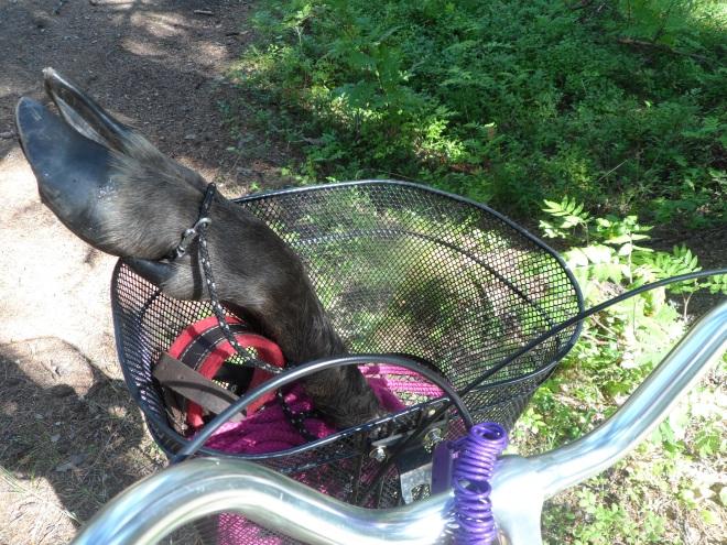 Jag cyklade iväg för att lägga ut de olika spåren