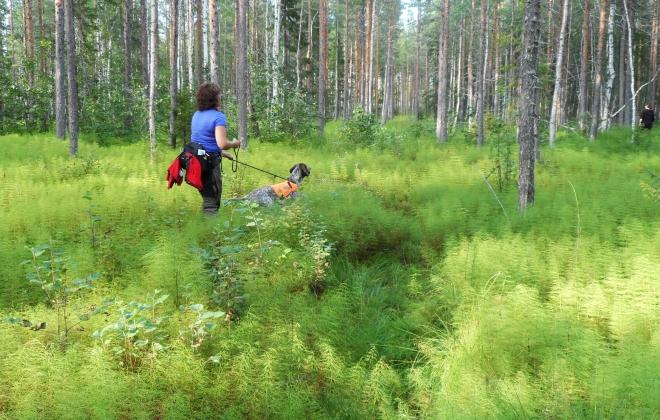Här tränar jag och Vivvi på att gå i eftergrupp. Visst var det en läcker vegetation i skogen här?
