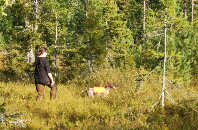 Uppfödaren Irene Nilsson in action med sin tik Jaga.