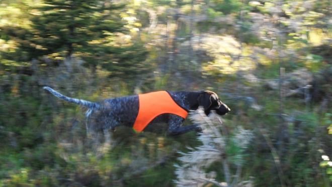 Hagel söker på genrepet, iförd sitt nya jaktskynke.