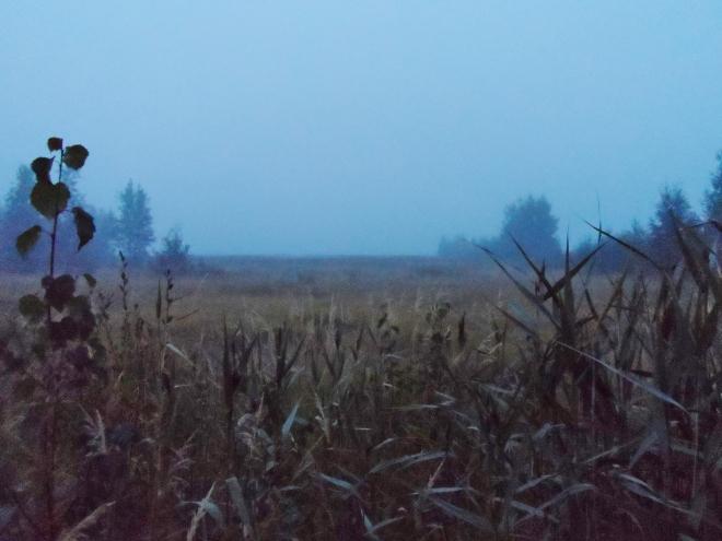Min utsikt på kvällen, lite dimmigt va?