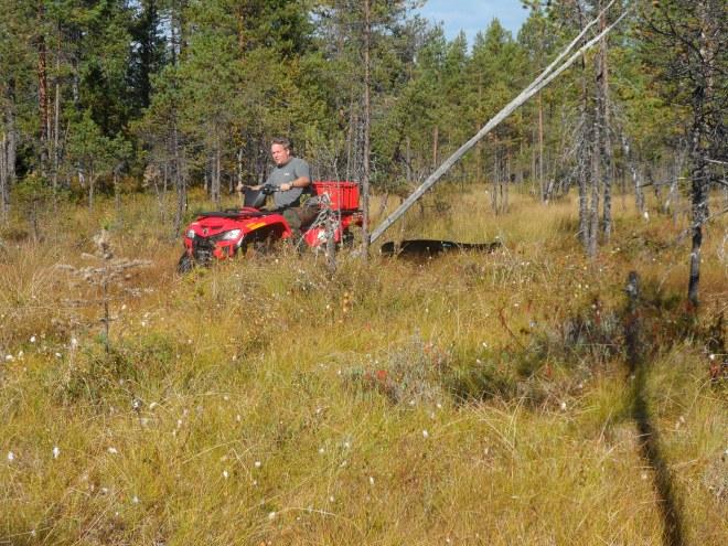 Anders Lundström är en hejare på att köra fyrhjuling. Därför fick han köra min fyrhjulinmg som jag hämtat för att vi skulle kunna forsla bort ko och kalv.
