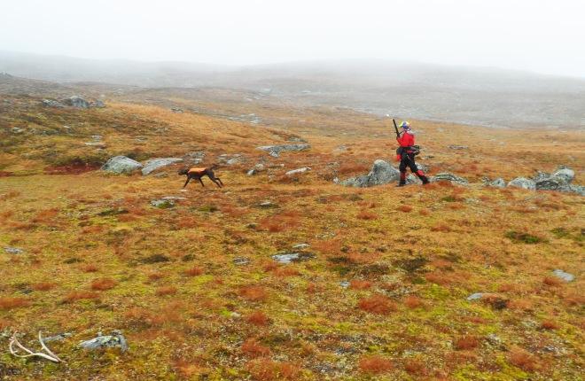 Lilian Westerlund och Loomi in action. Notera renhornet till vänster i bild. Det såg jag inte förrän jag tog upp bilderna hemma =)