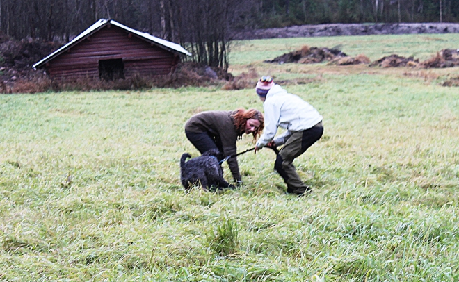 Här gör vi de inledande övningarna med kerry blue terriern.