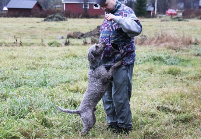 Här är Troll, en av de spanska vattenhundarna, som kan tänka sig en godis efter att ha varit duktig.