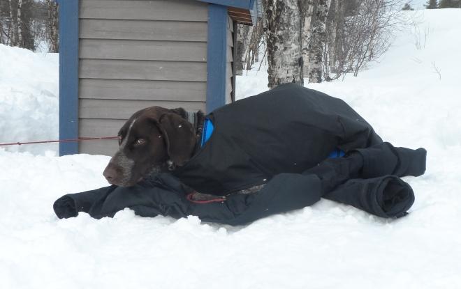 Hagel fick ha dubbla täcken och ligga på min täckjacka. Men ändå såg han inte helt nöjd ut när vinden friskade i.