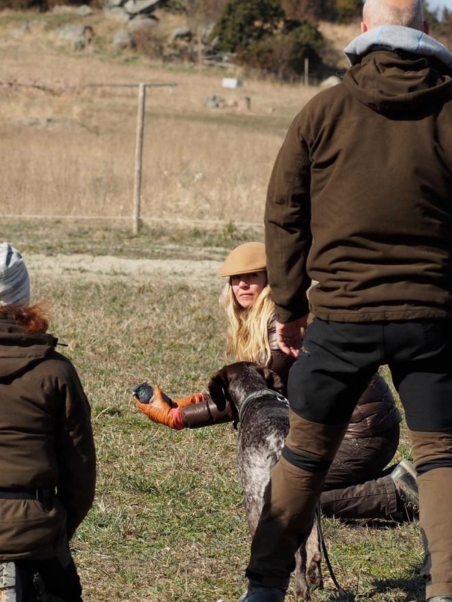 """Hagel får extra träning på ståndet genom att Marie håller en duva som får flaxa iväg när Hagel """"stöter upp den"""". Foto: Sangita Nilsson."""