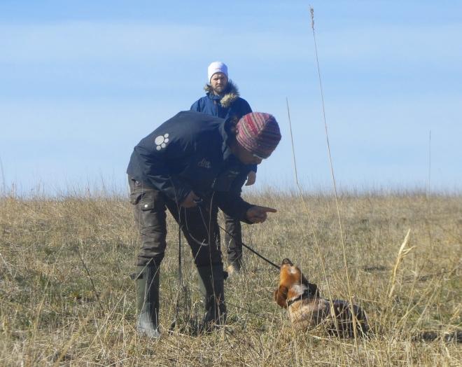 Kursledaren Amir visade ofta på våra hundar. Något jag inte är helt okej med. Visst finns det en poäng med att visa handgripligen hur man ska tillrättavisa en hund. Men det är lätt att sätta sig i respekt hos en främmande hund – och det är inte alltid som det ger mer än det tar i sådana här fall.