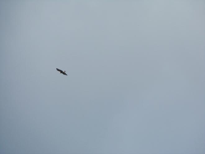 Vi såg en fågel som inte var en ripa. Men var det var - ja vet du det?